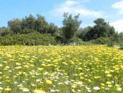 Plot for Sale - LOUTRAKI